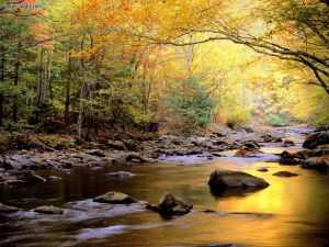Little_River_in_Autumn_Great_Smoky_Mountains_National_Park_Tennessee_1440x1080